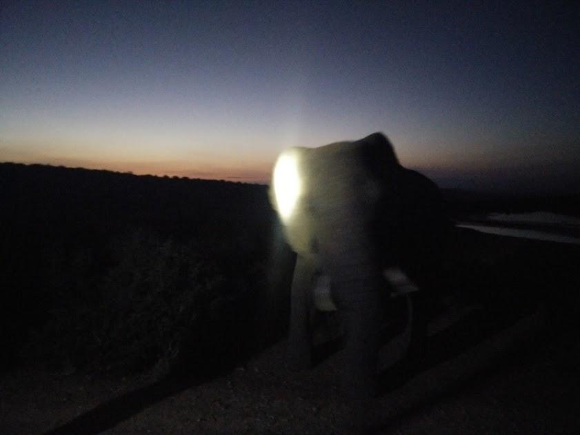 nightelephant
